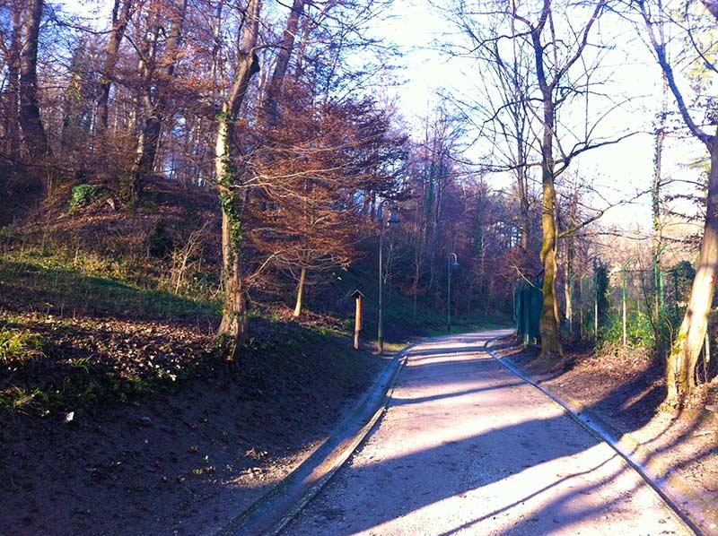 Leafy Zagreb | Zagreb Honestly