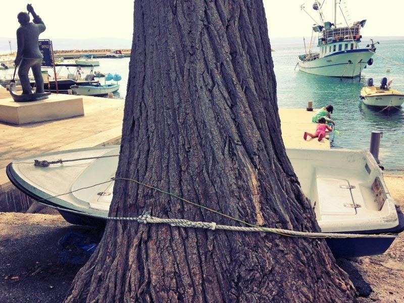 Klenovica - klen tree