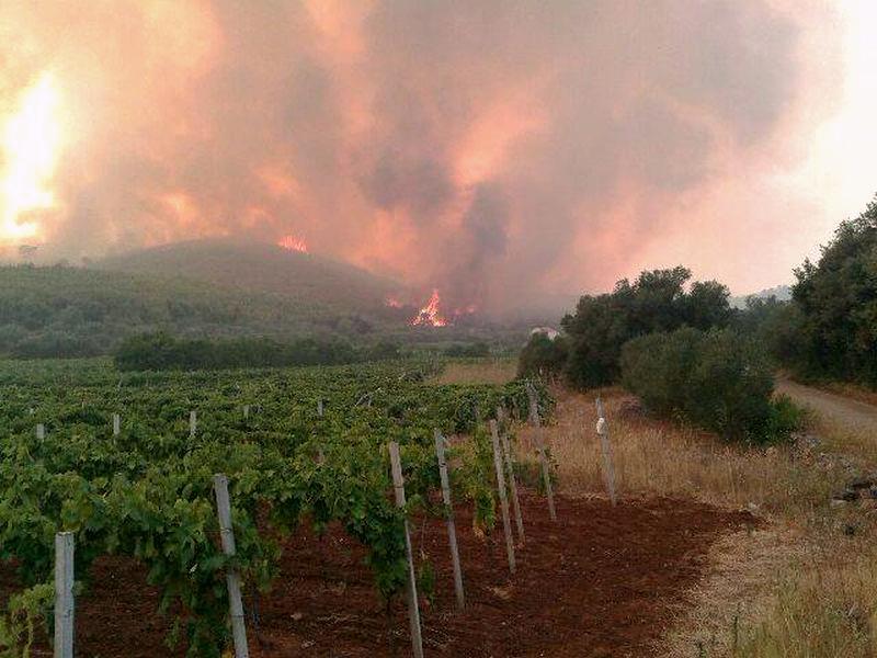 Croatia coastal wildfire - Trstenik vineyards on fire