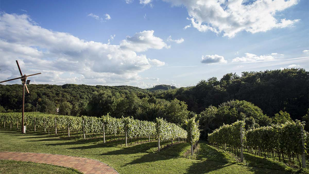 Medjimurje vineyards | Zagreb Honestly