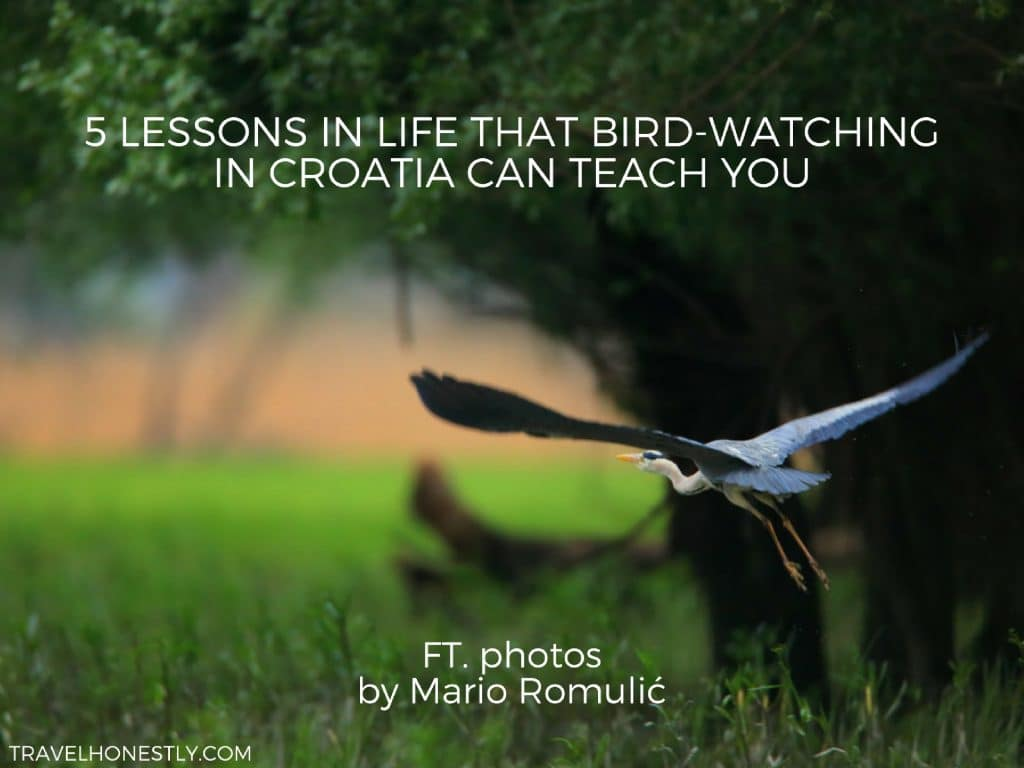 You should try bird-watching in Croatia. Not only will you spot 387 bird species, you will also learn about life, nature and our desire for freedom.
