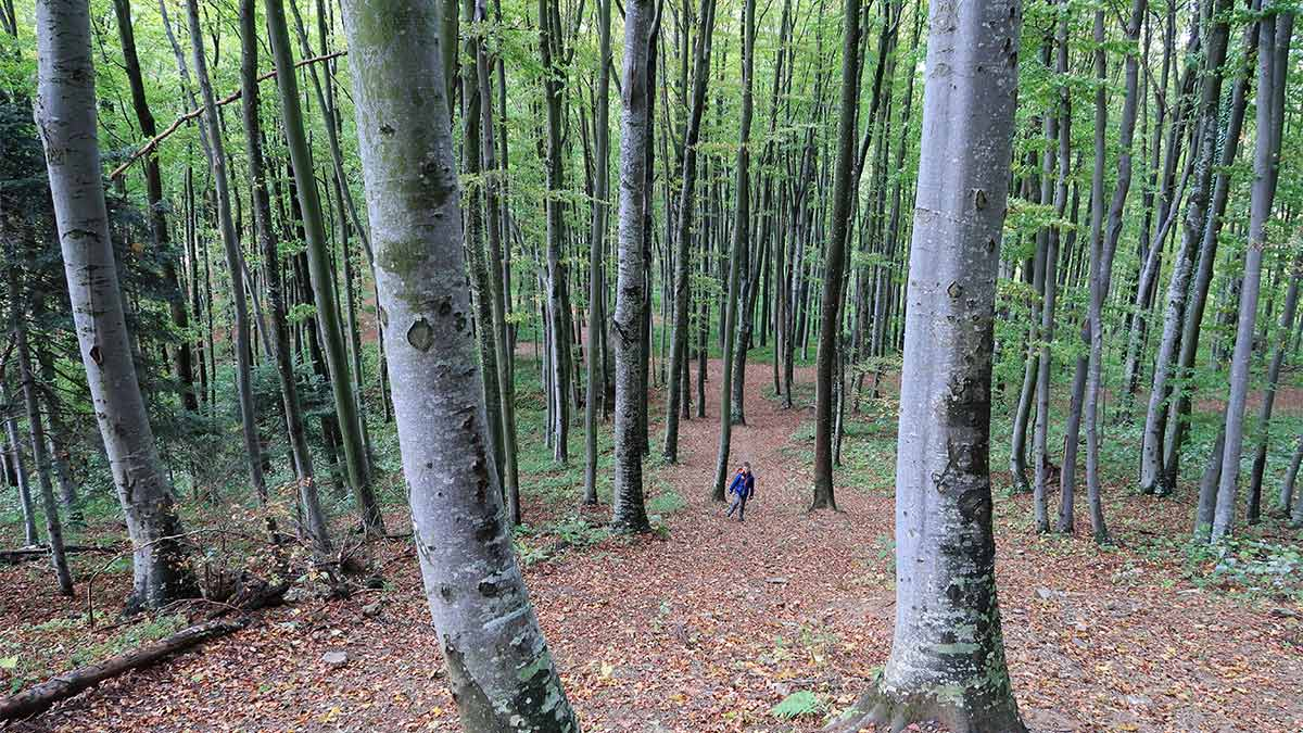 Hiking on Medvednica Sljeme | Zagreb Honestly