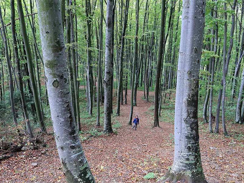Hiking on Medvednica Sljeme | Croatia Honestly