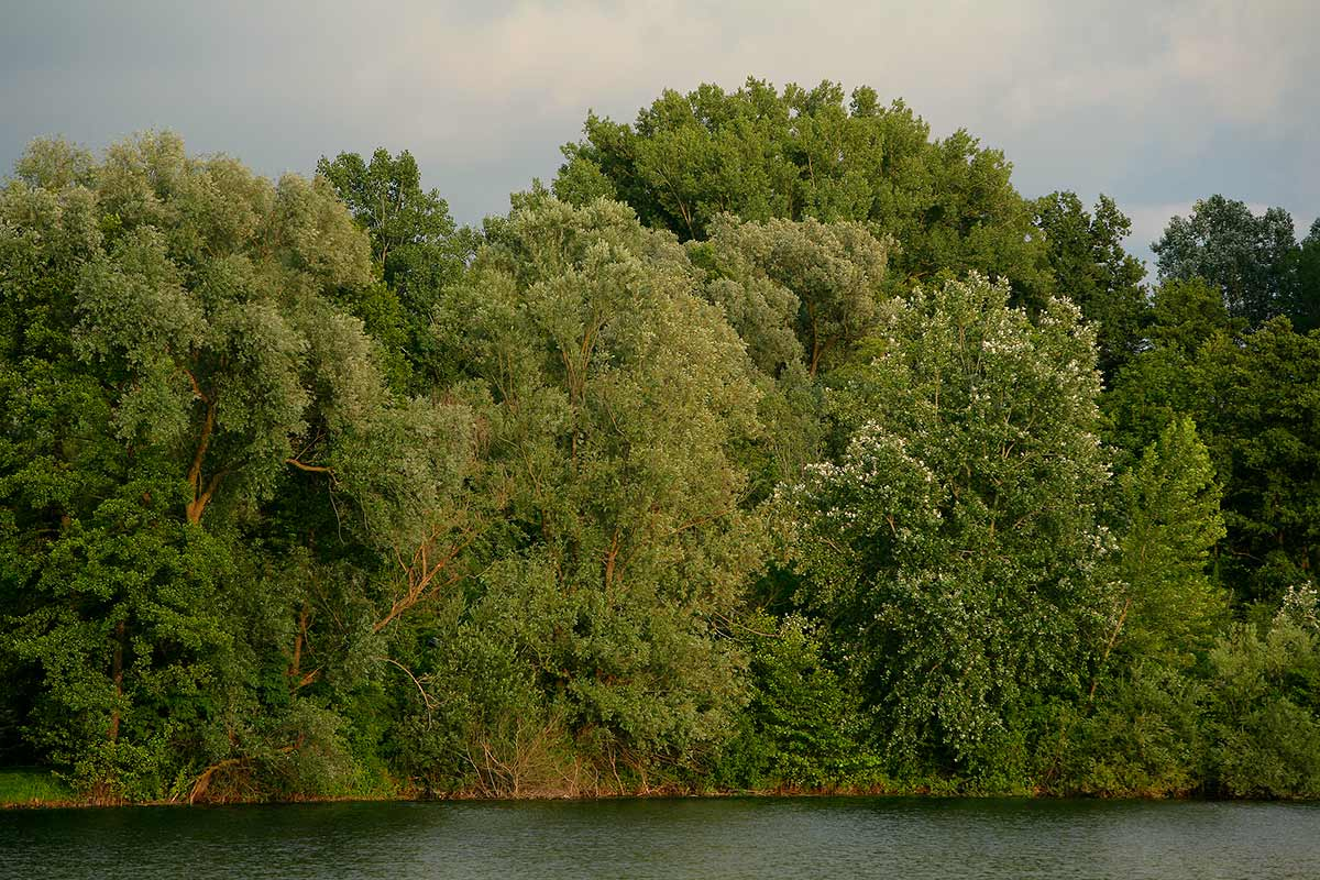 Down the Drava river, Ješkovo